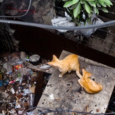Katzen in Bangkok by Katja Boehm