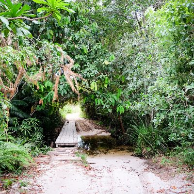 Koh Rong Samloem Kambodscha Dschungel by Katja Boehm